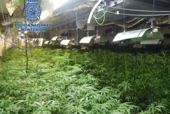 Plantació marihuana